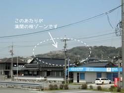 sakura23_00.jpg