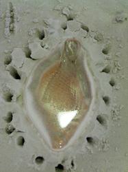 sandcast_15.JPG