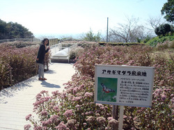 asagimadara2011_1.jpg