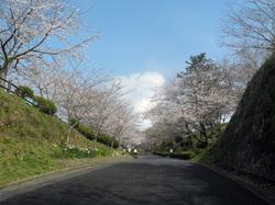 sakura2013032_01.JPG
