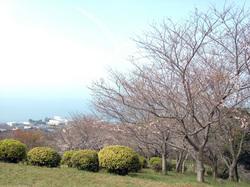 sakura2013032_05.JPG